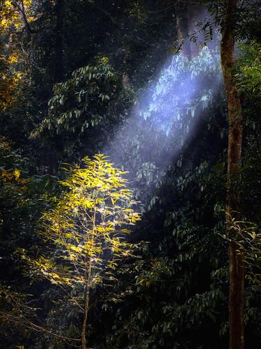 mist forest lumix panasonic jungle malaysia rol raysoflight naturesfinest coth jeramtoi fz28 ishafizan sailsevenseas