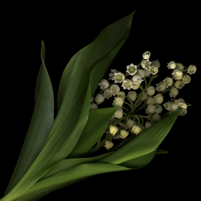 WELCOME MAY!  FIRST of MAY, MUGUET DAY