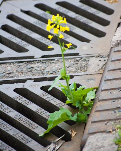 Adventurous plant