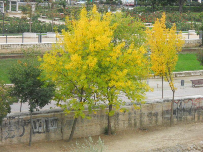 Árboles en otoño 7