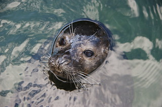 seal | by twicepix