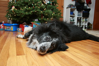 """""""I'm the BEST present under the tree!"""" 