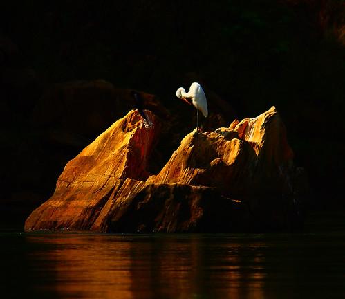india bird nature canon river eos wildlife narmada jabalpur 450d canonefs55250mmf456is aksveer