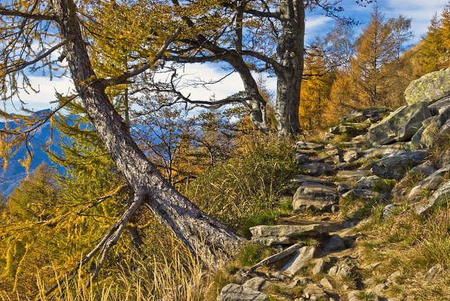 Autumn's time in Ticino.On the way to Cima della Trosa. Switzerland. October27,2009: No. 112.