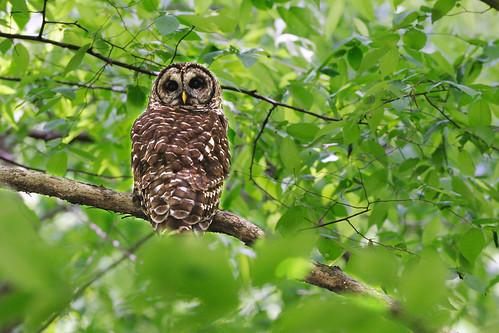 Owl on Sunday Walk   by ralph and jenny