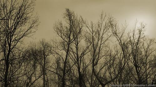 trees winter sun mist silhouette fog branches nikond100 boughs treesinfog silhouettedtrees flickraward burlingtonncusa chrislaforet claforet