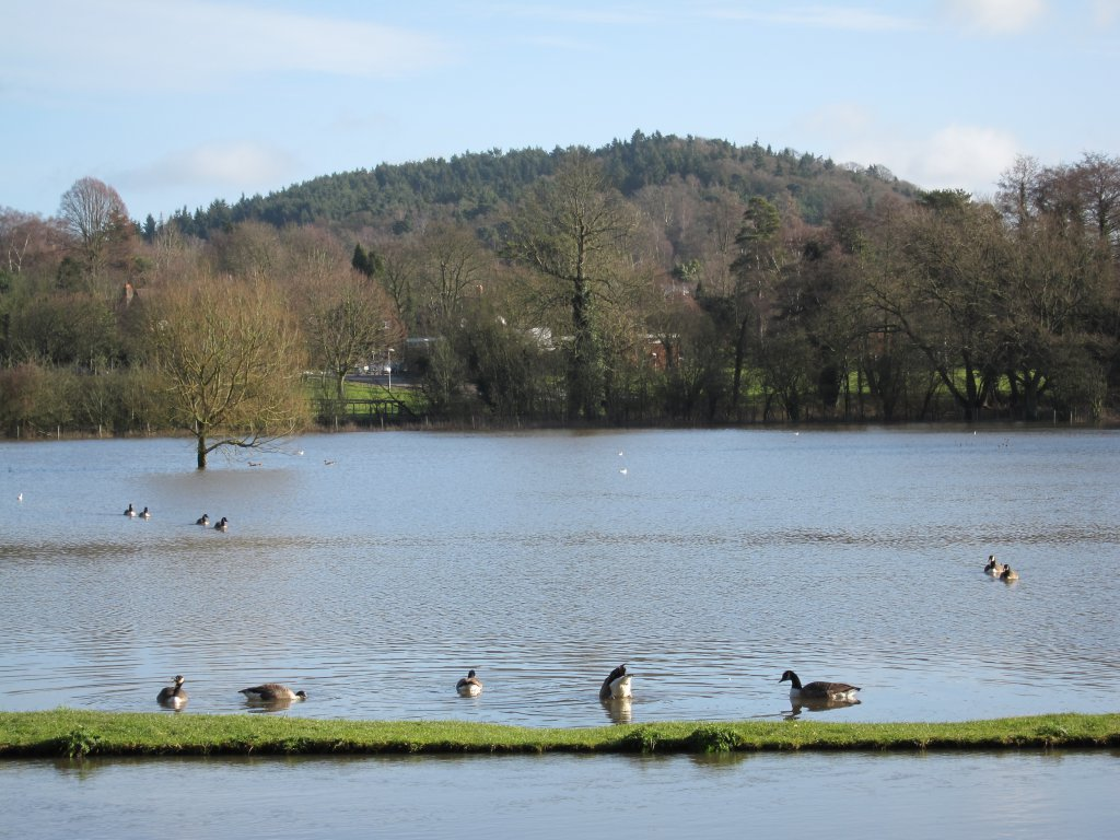 Field turned into a large duck pond At least some creatures were enjoying the flood