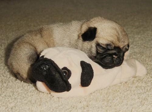 Bonny & Beanie Baby 2
