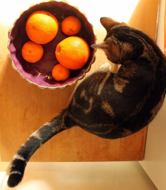 mack and the oranges