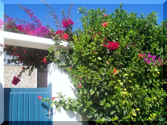 Moroccan flowers-marokkói virágok