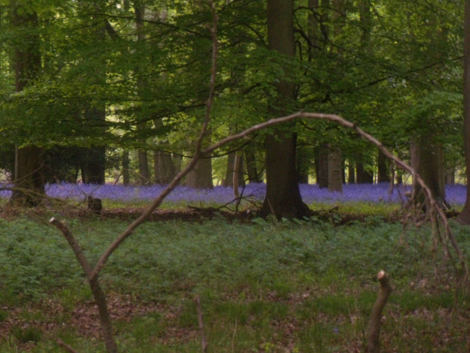 Purple streak Henley Circular via Stonor