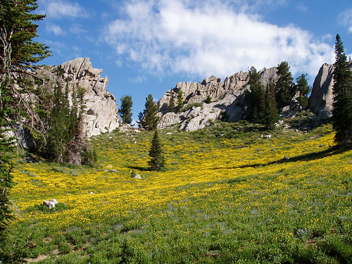 One of the several alpine meadows on Lone Peak, with yellow and blue wildflowers.