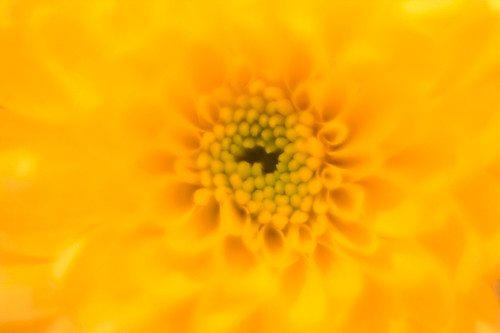 Yellow - Macro | by Hexagoneye Photography
