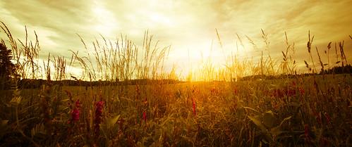 sunset sky panorama storm field clouds photoshop canon landscape ma dusk canon1740f4l 40d grotonmassachusetts patrickcampagnone