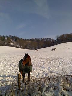 Horses in snow-covered field near Woldingham