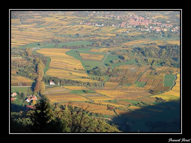 vu des vignes automne  Mont Sainte Odile