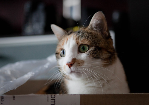 sie liebt Kartons | by sake028
