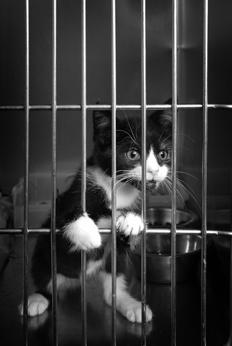a cat behind the bars of its cage