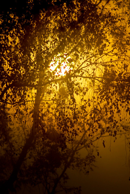 golden and foggy