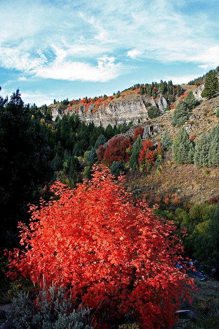 Red Maple and Cliff