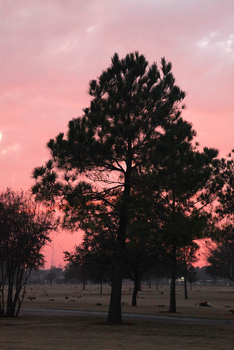 pink trees sunset red usa cemetery graveyard pine clouds army liberty freedom us twilight texas dusk military navy sailors houston honor headstones graves national granite wife service marines np wives airforce tombstones markers pinetrees veterans sacrifice soilders airmen armyaircorps nationalcemetery houstonnationalcemetery aircorps militarycemetery graditude twilightglow wyojones