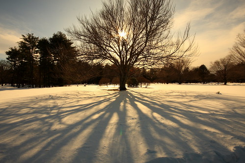 travel winter shadow snow tree canon landscape eos massachusetts newengland sunsets digitalslr 40d kerrprice