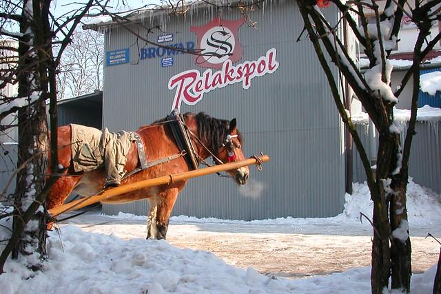 Koń w browarze / A horse in a brewery