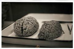 brains | by aananya