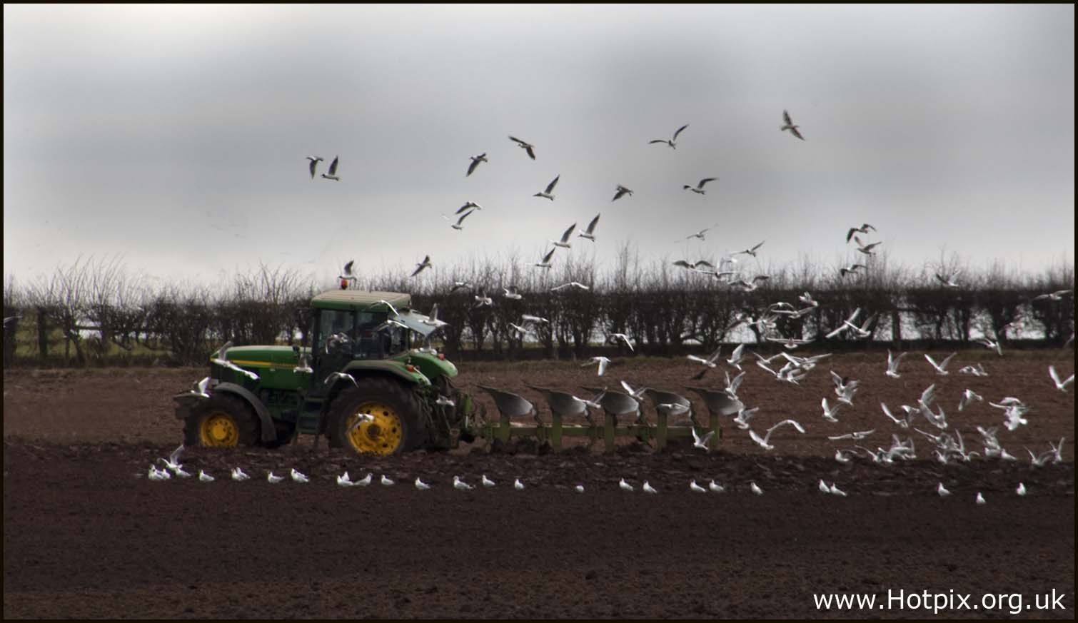 tractor,field,plough,ploughing,lymm,a56,village,cheshire,north,west,uk,england,brown,birds,following,gulls,fly,flying,hotpics,hotpic,hotpick,hotpicks,highway,road,hotpix!