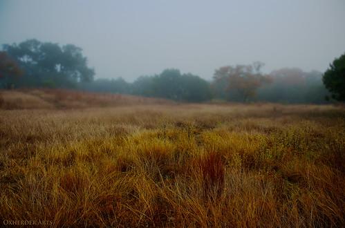november mist grass misty fog austin grey texas tx gray driftwood grassland oscote