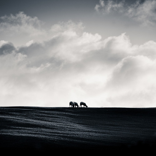 black and white by ►CubaGallery