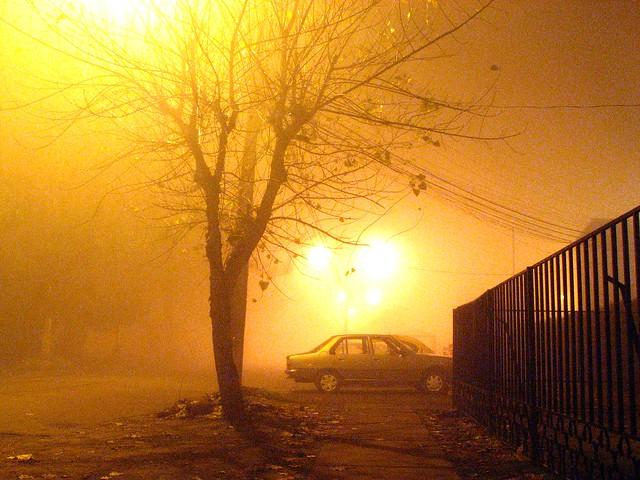 Un árbol solo, en la niebla...