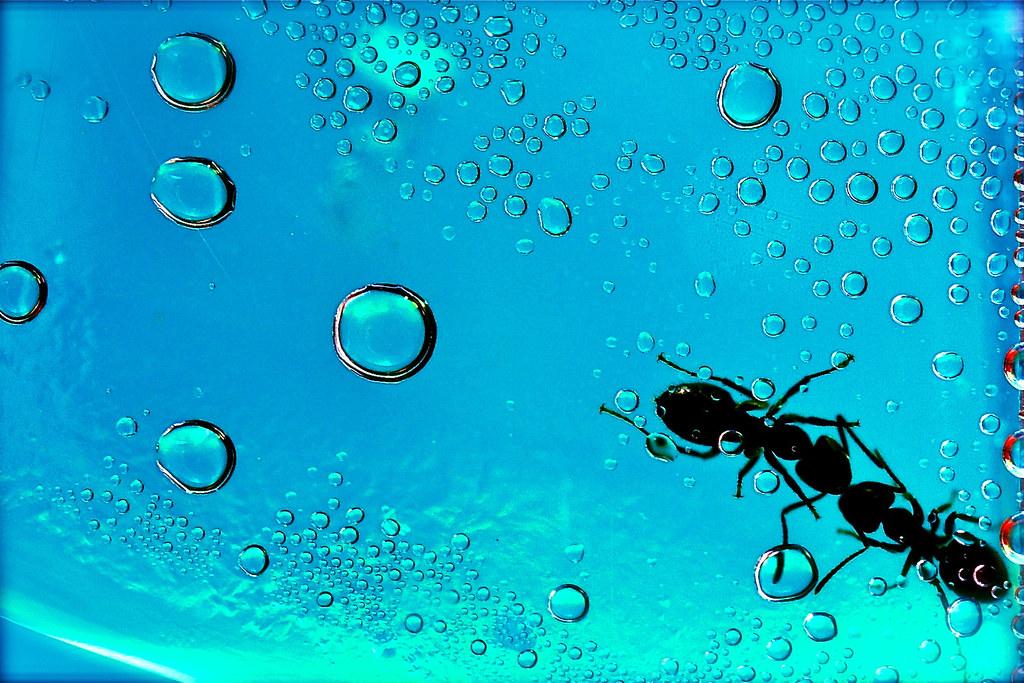 Mrówki / Ants