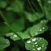 Fall Wetness by VanGorkum Photography