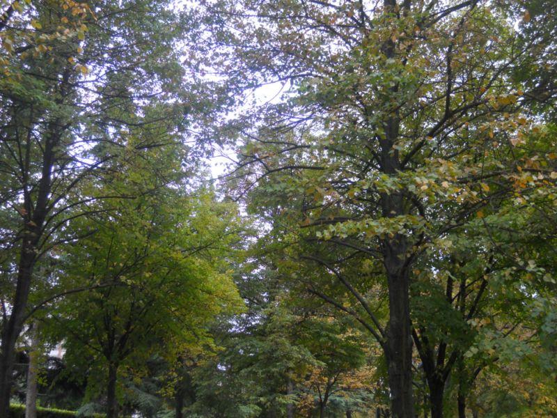 Árboles en otoño 4