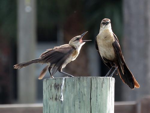 MOM!!!!!!! | by magnificentfrigatebird