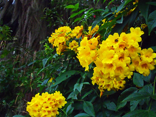 Cellophane Flowers Of Yellow And Green Exteriores V