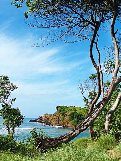Tartane (Martinique)