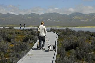 Walking the board walk at Soda Lake | by ChuckThePhotographer