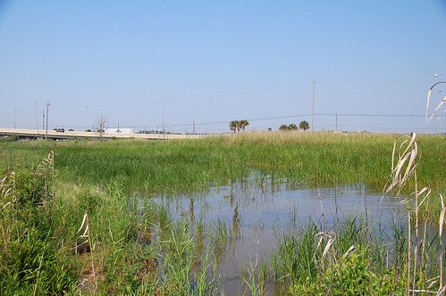 alabama dogriver invasive gulfcoast invasivespecies mobilebay invasiveplant phragmitesaustralis helenwoodpark