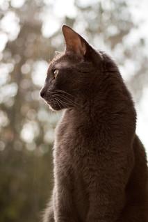 Storm Cat | by KeriFlur