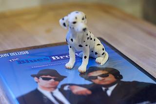 Dog Blues | by cogdogblog