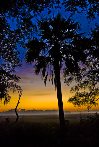 sunset silhouette fog creek sunrise nikon palm palmtree marsh hdr d40x spartinagrass benrosenberg brosephotography