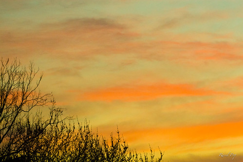 trees colors clouds sunrise canon flickr unitedstates branches maryland smugmug facebook northbethesda googlephotos canoneos30d