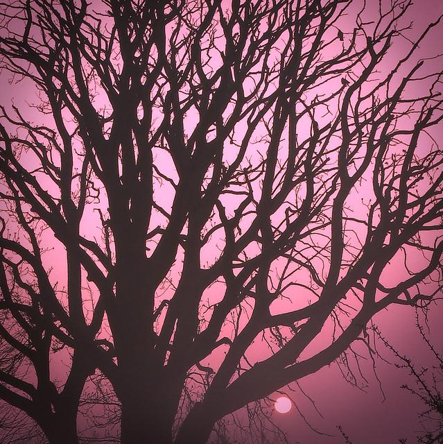whimsical foggy tree