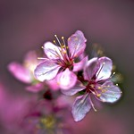 Pink contrast