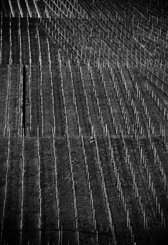 Dormant Vineyard   by J e n s