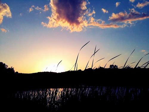 blue sunset urban sun water grass silhouette basketball yellow clouds analog evening pond birmingham cloudy dusk horizon alabama streetphotography tall blade blades 3gs iphone filmlab iphoneography jasonlparks