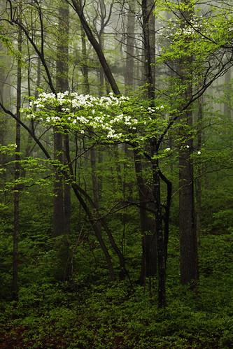 fog georgia dogwood chattahoocheenationalforest