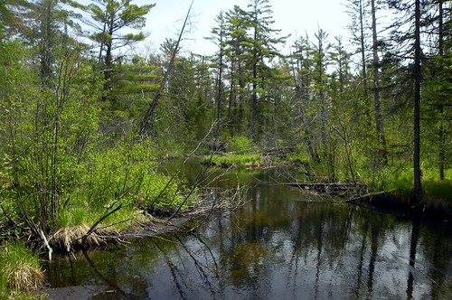 park river state michigan pines ausable hartwick